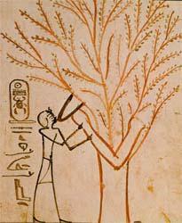 Egyptský strom života kŕmi mŕtveho potravou.